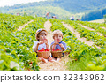 Two little sibling boys on strawberry farm in 32343962