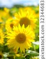 向日葵 向日葵园 夏天 32344683