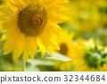 向日葵 花朵 花卉 32344684