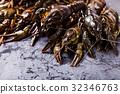 Fresh crayfish close-up 32346763