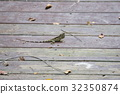 蜥蜴 有鱗目 蜥蜴亞目 32350874