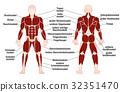 muscles german names 32351470