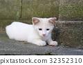 小猫 猫咪 猫 32352310