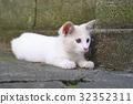 小猫 猫咪 猫 32352311