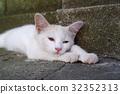 小猫 猫咪 猫 32352313