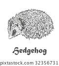 เฮดจ์ฮอก,เวกเตอร์,สัตว์ 32356731