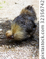 chicken, hen, domestic 32356742