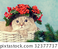 Portrait of cat with green Christmas wreath 32377737