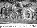 斑馬 旅行 黑色 32382760