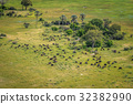 Aerial view of a herd of Buffaloes. 32382990