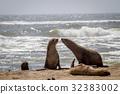 密封 動物 海洋 32383002
