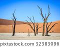 沙漠 樹木 樹 32383096