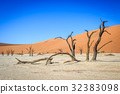 Dead trees in a salt pan in the Deadvlei. 32383098