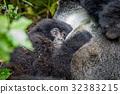 山峰 大猩猩 叢林 32383215