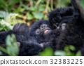 山峰 大猩猩 叢林 32383225