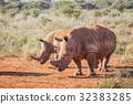 Two White rhinos standing in the sand. 32383285
