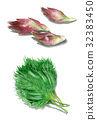 皺紫蘇 綠色紫蘇 神聖祝福 32383450