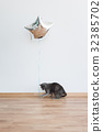 Cat playing with baloon holding the ribbon 32385702