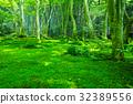 tender, green, verdure 32389556
