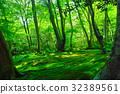 tender, green, verdure 32389561