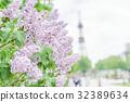 札幌电视塔 丁香花 花朵 32389634