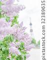 丁香花 大通公园 盛开 32389635