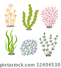 Sea plants and aquatic marine algae. Seaweed set 32404530