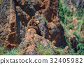 Brown bear on rock with open mouth 32405982