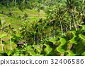Beautiful rice terraces in Ubud, Indonesia 32406586