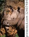 Close-up of muddy white rhinoceros beneath cliff 32407484