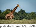 Giraffe with legs hidden behind grassy ridge 32407696