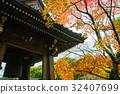 楓樹 紅楓 楓葉 32407699