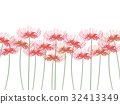 cluster amaryllis, bloom, blossom 32413349