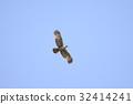 wild bird, bird, birds 32414241