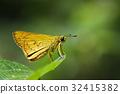 Image of common dartlet butterfly. 32415382