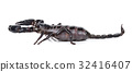 Scorpion isolated on the white background 32416407