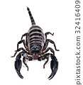 Scorpion isolated on the white background 32416409