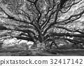 樹木 樹 巨大的 32417142
