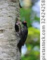啄木鳥 鳥兒 鳥 32424258