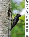 啄木鳥 鳥兒 鳥 32424259