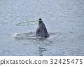 Tsukumi dolphin island (Tsukumi city, Oita prefecture) 32425475