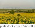Alone tree in the sunflower field 32425603
