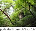 Kagoshima prefecture Yakushima Jomon cedar 32427737