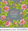 rose, flower, wild 32428602