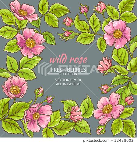 wild rose flowers frame 32428602