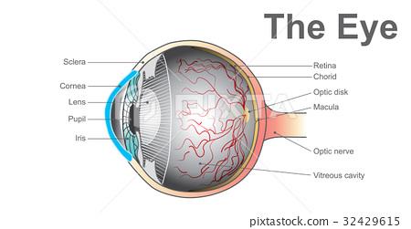 eye system 32429615