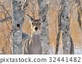 กวาง,สัตว์,ภาพวาดมือ 32441482
