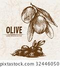 Digital vector detailed line art olive 32446050