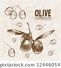 Digital vector detailed line art olive 32446054