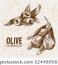 Digital vector detailed line art olive 32446056